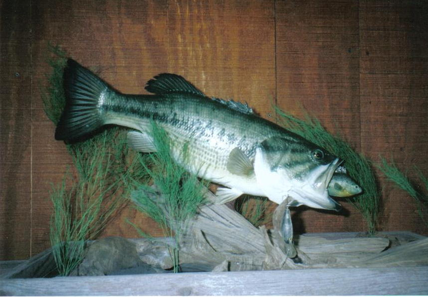 Sporting life taxidermy home page for Fish taxidermy near me